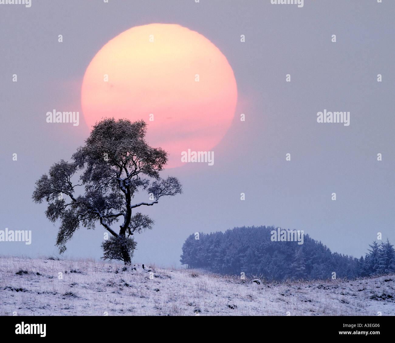 GB - Escocia: Invierno en Glen Lochsie Foto de stock