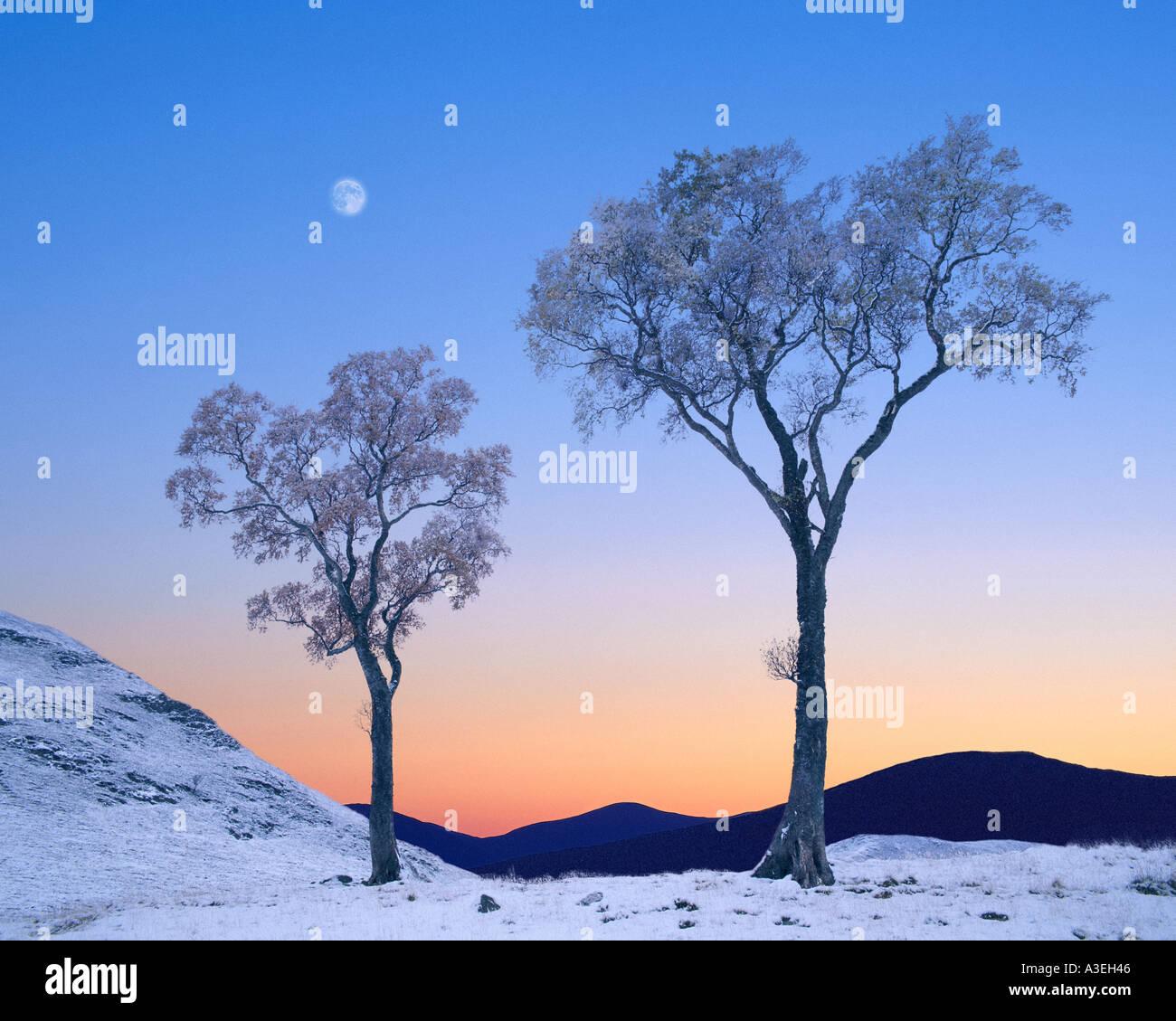GB - Escocia: Invierno en Glen Lochsie Imagen De Stock