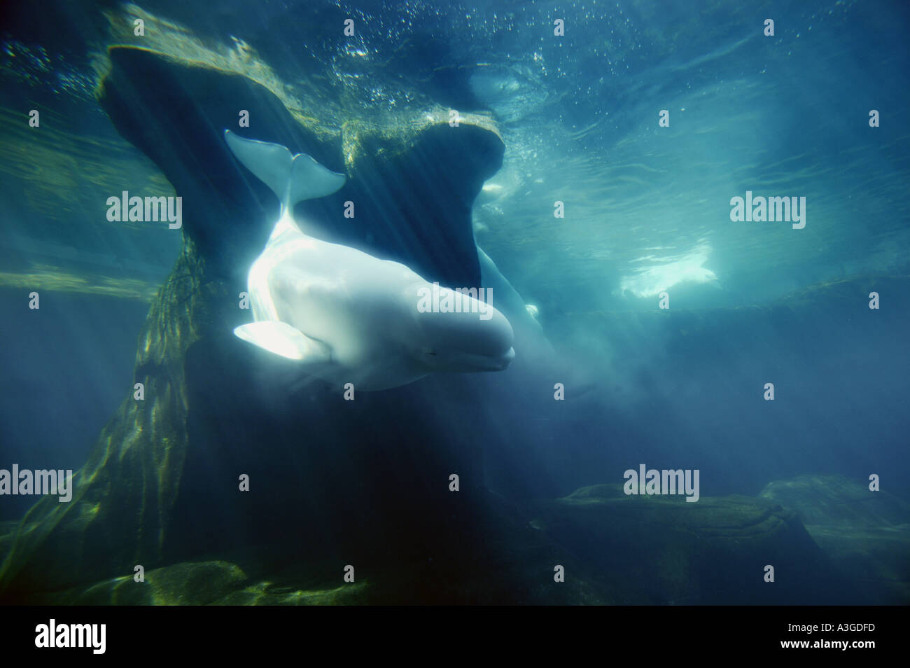 La vida submarina Imagen De Stock