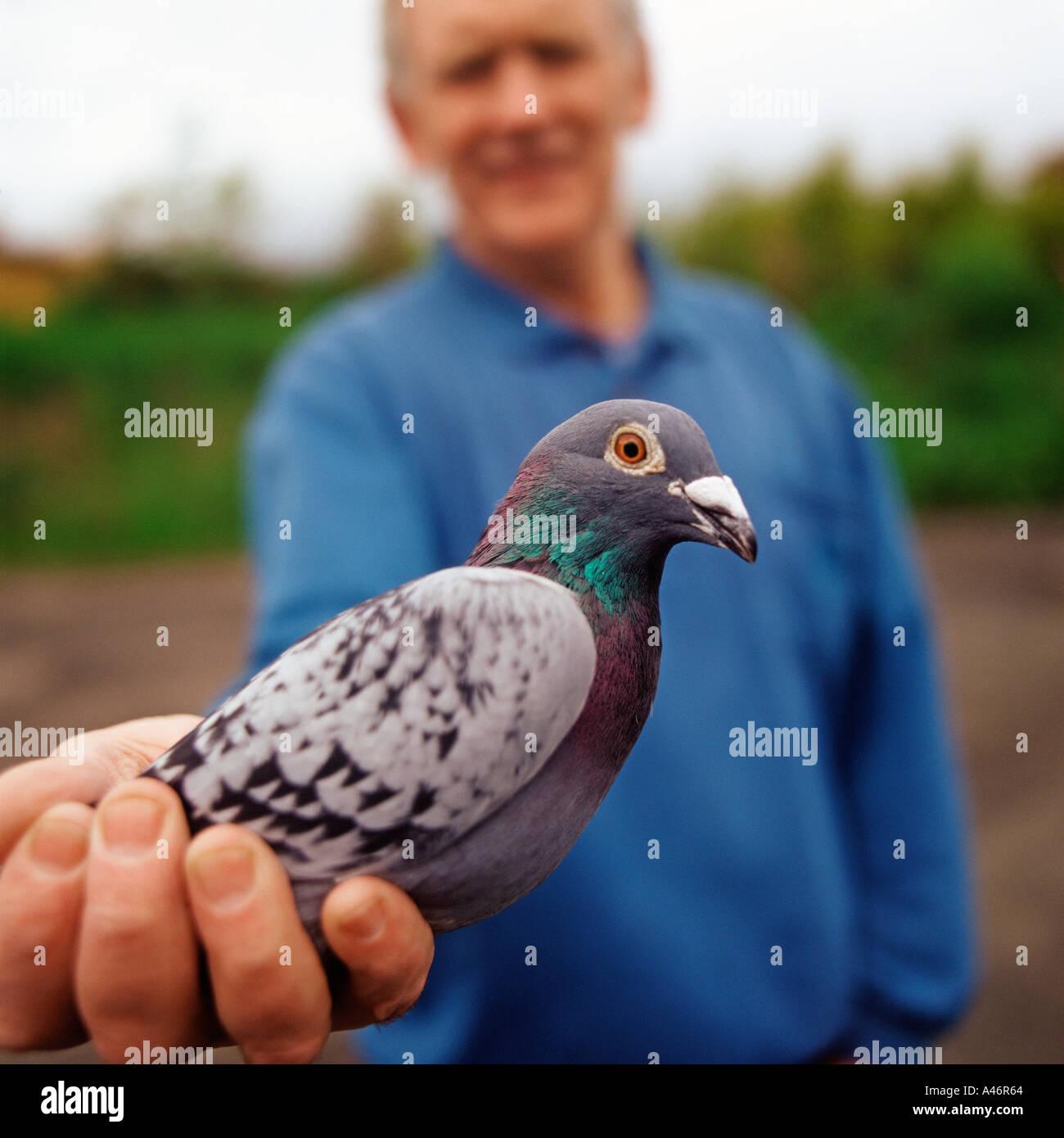 Hombre sujetando el pet pigeon Imagen De Stock