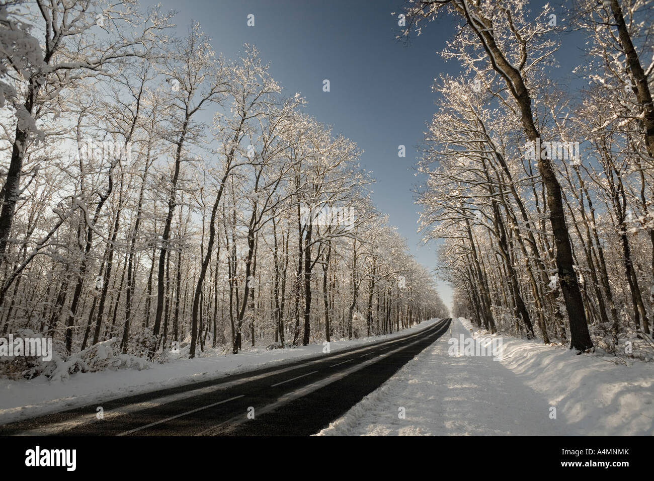 Una carretera atravesando un bosque de roble nevado (Francia). Ruta une forêt de chênes traversant (Quercus sp) recouverte de neige. Foto de stock