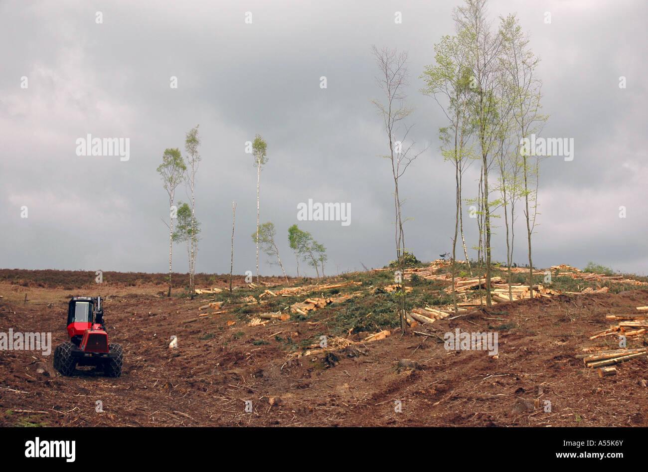 La deforestación de la gestión forestal en el New Forest, Inglaterra, Reino Unido. Imagen De Stock