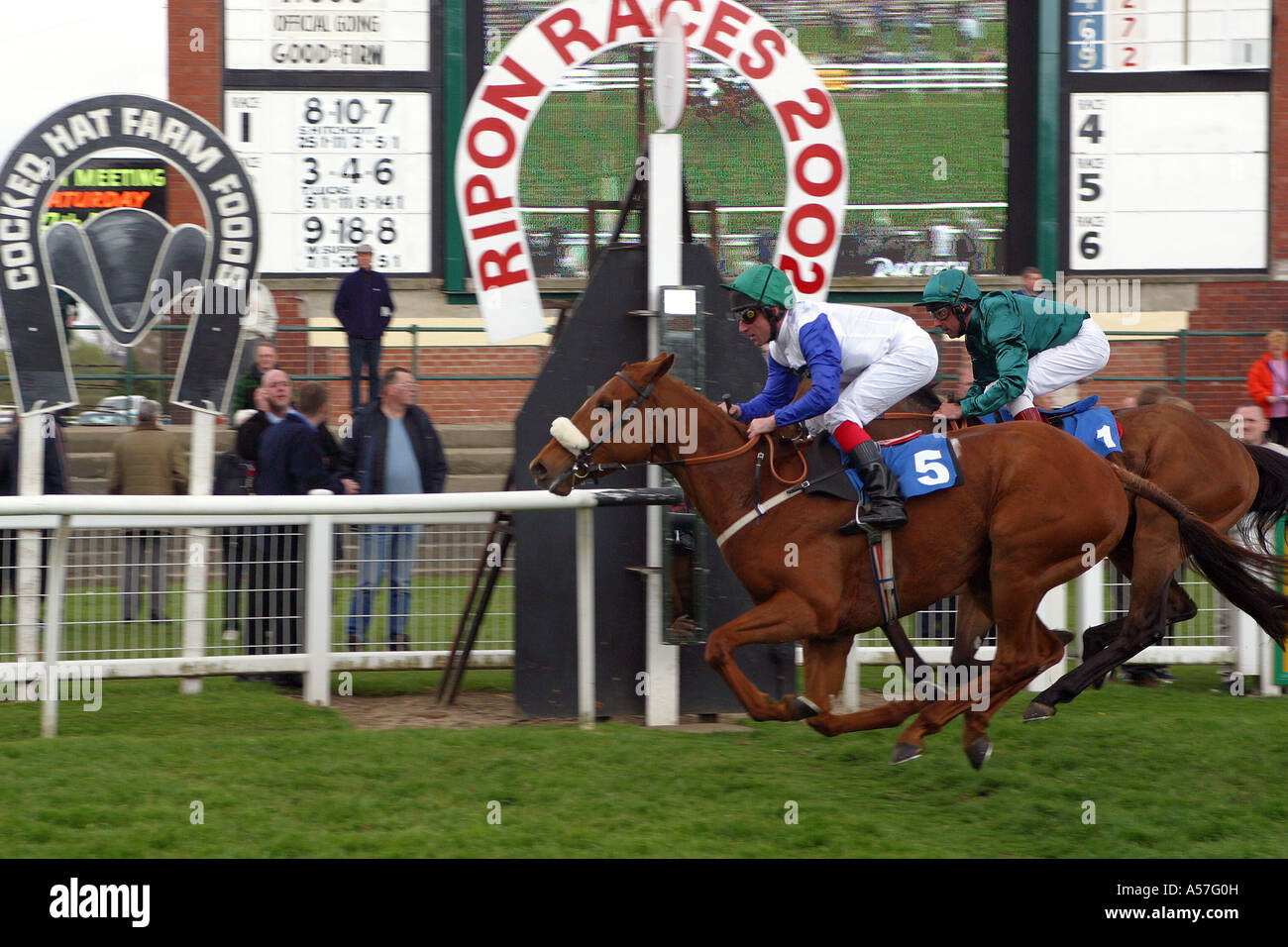 UK Yorkshire Ripon razas caballo de carreras Kristenson ganar Imagen De Stock
