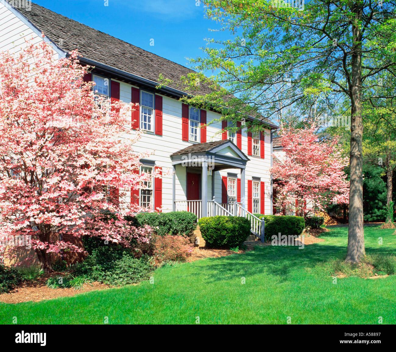 Rosa floración flanco dogwoods gran marco blanco de la casa de dos ...