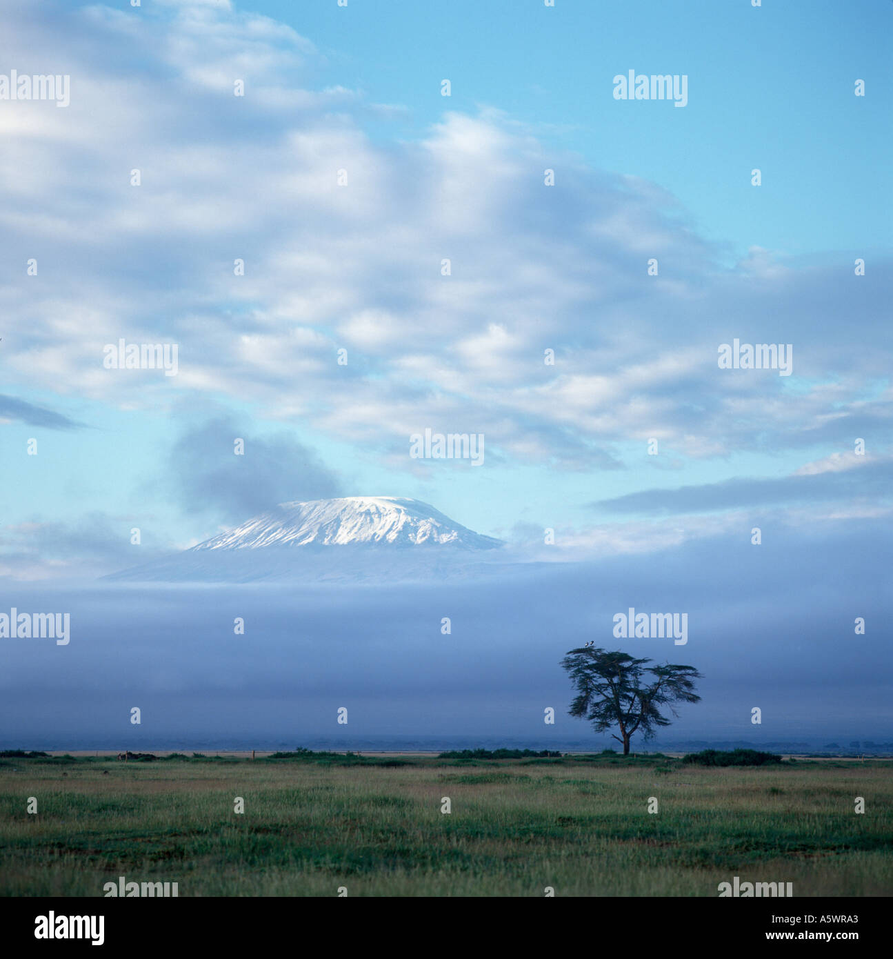 Pico nevado del Monte Kilimanjaro al amanecer de Amboseli Lodge, Parque Nacional de Amboseli, Kenia, África Oriental. Paisaje africano Imagen De Stock