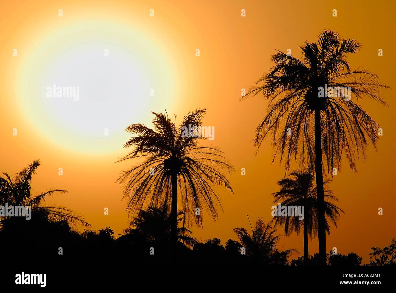 Palmeras esbozadas contra un cielo al atardecer, Gambia, África Imagen De Stock
