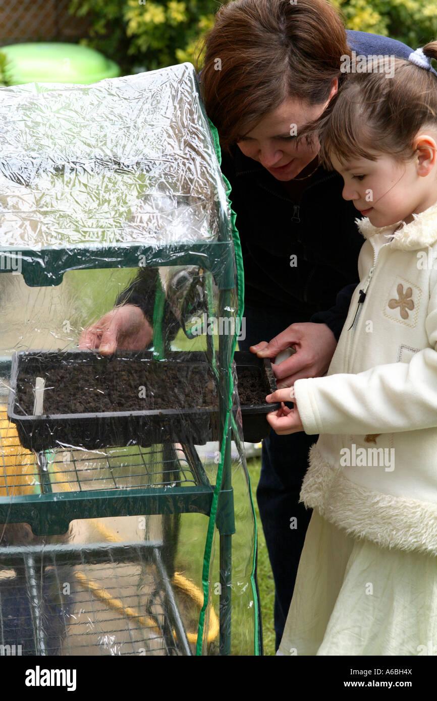Madre ayudando a su joven hija Coloque bandejas de semillas plantadas en un pequeño invernadero de plástico para la germinación en primavera Foto de stock