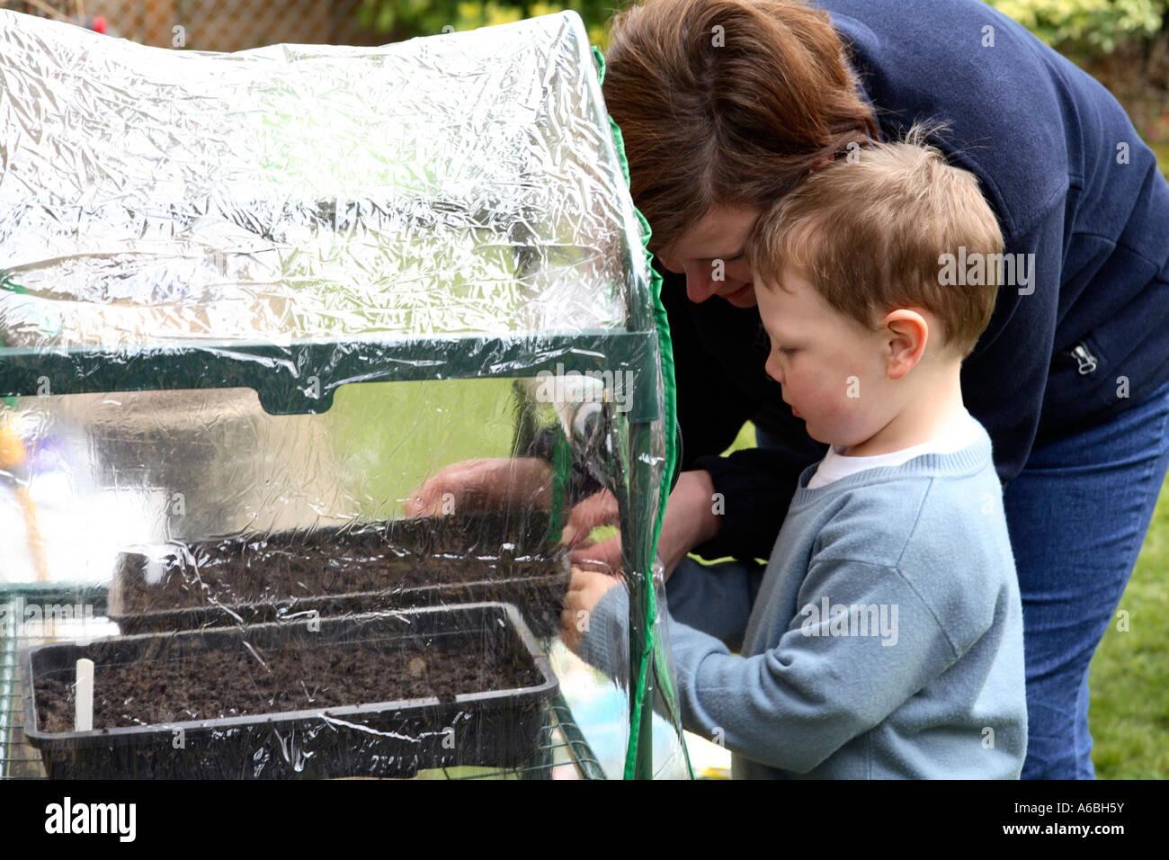 Madre ayudando a su joven hijo Coloque bandejas de semillas plantadas en un pequeño invernadero de plástico para la germinación en primavera Foto de stock