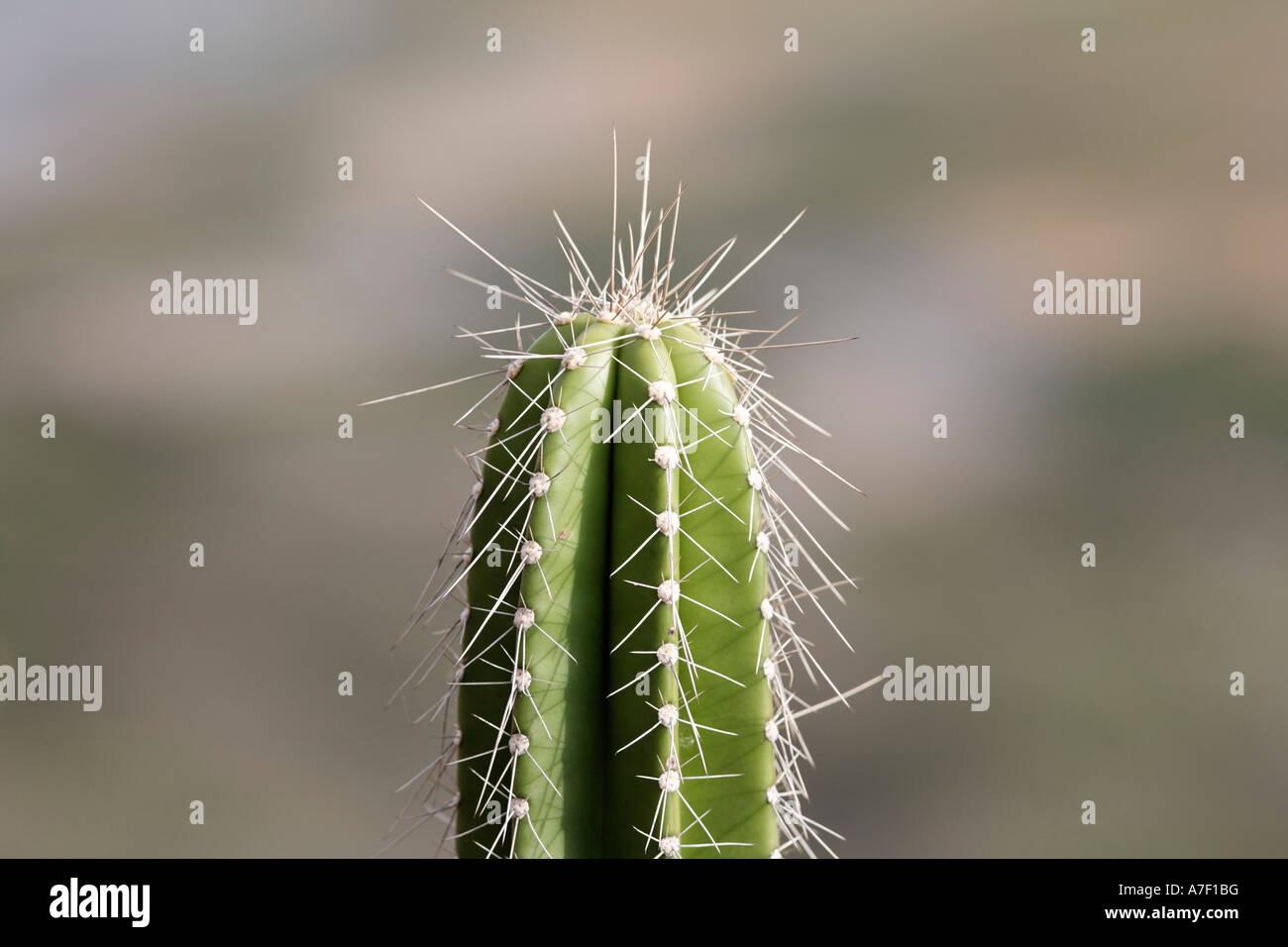Cactus en el Parque Nacional Palo Verde, Guanacaste, Costa Rica Imagen De Stock