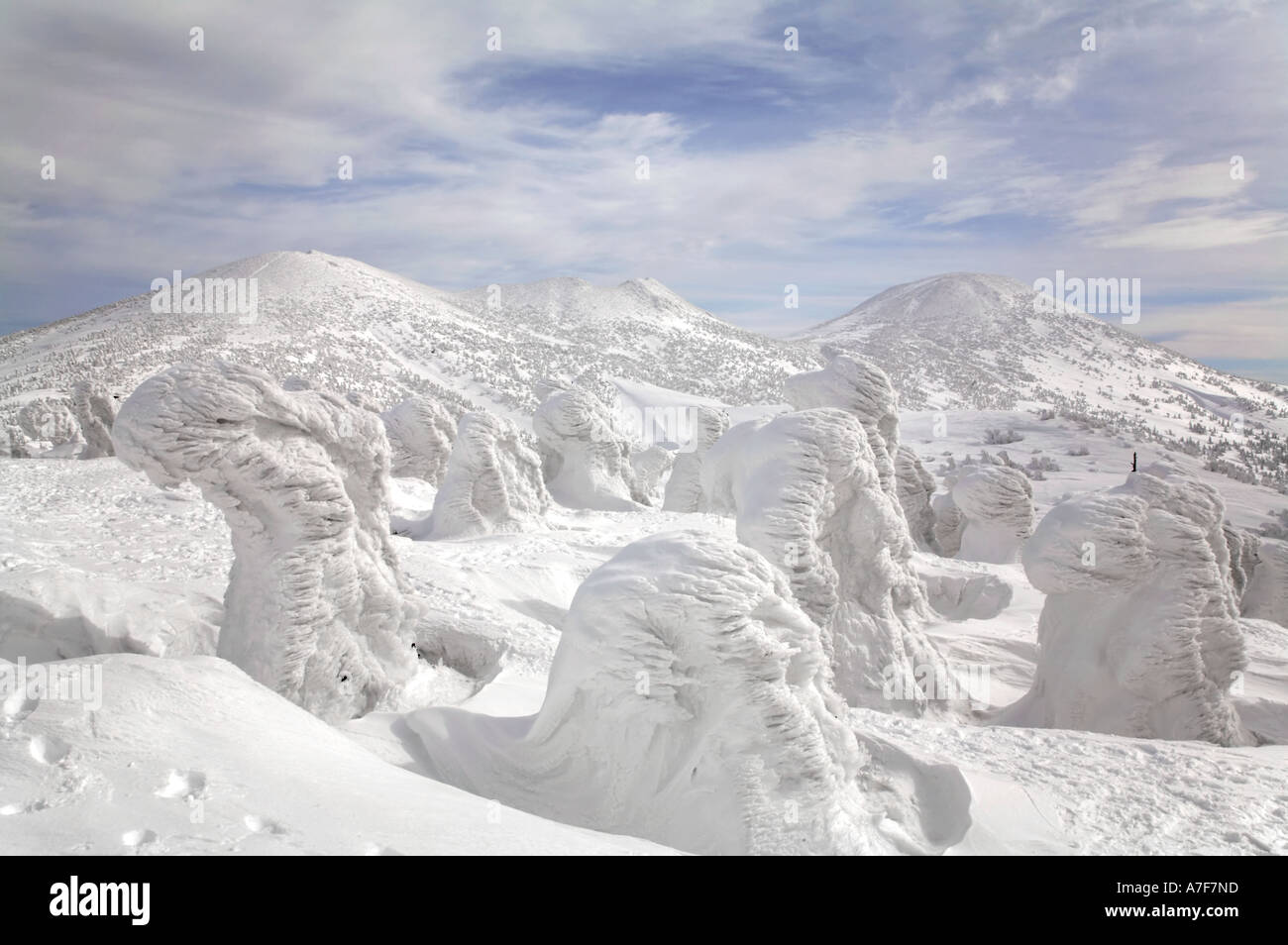 Los monstruos de nieve - Los Árboles con nieve congelada en invierno en el monte Hakkoda Japón Foto de stock