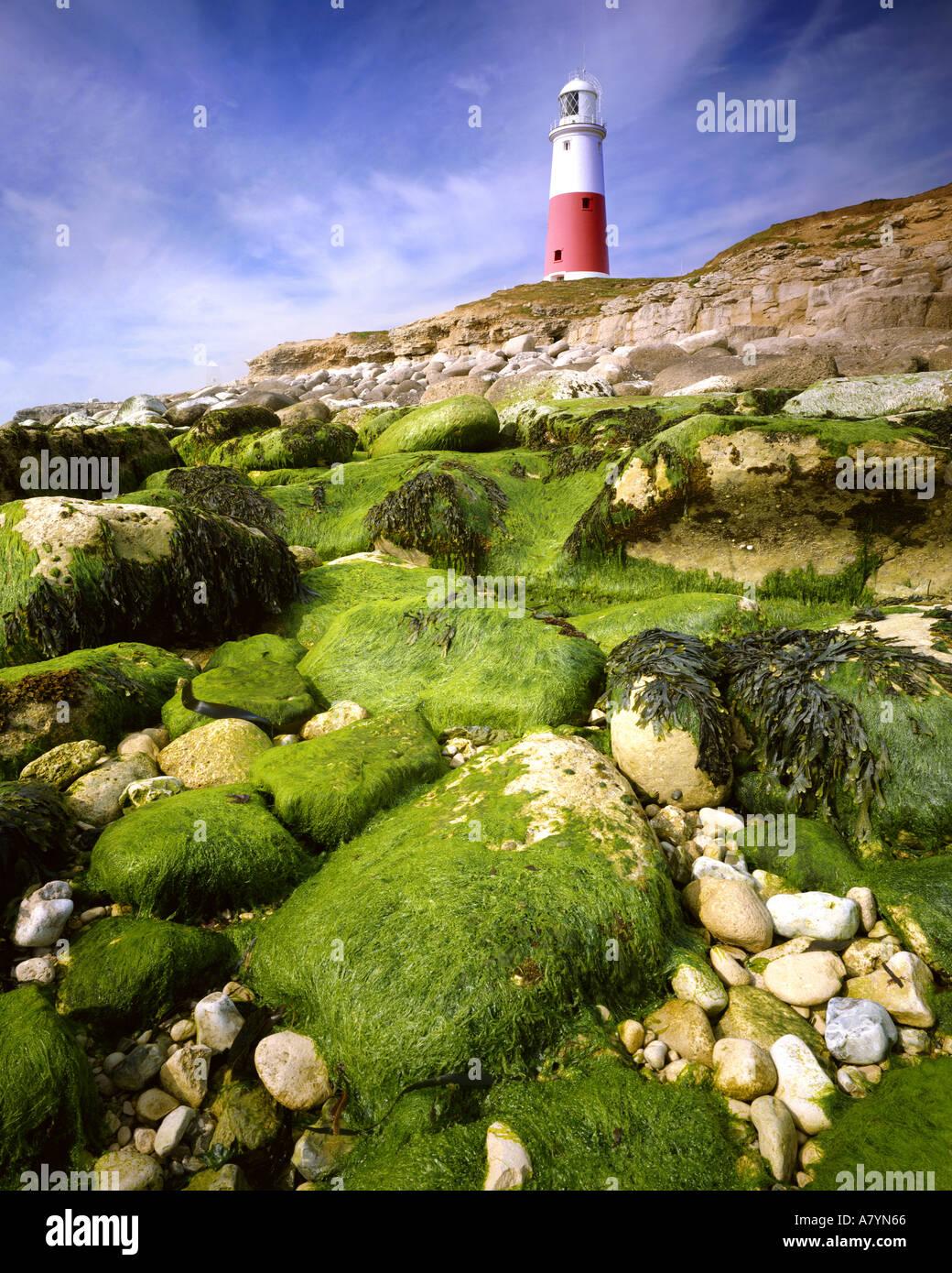 GB - Dorset: Portland Bill Faro Imagen De Stock