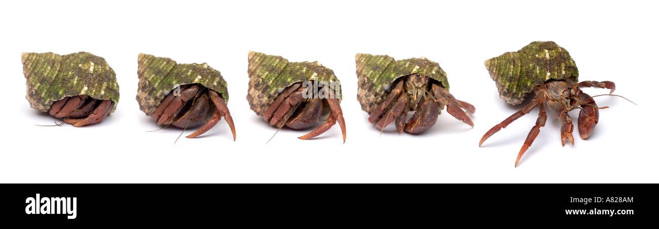 Hermit Crab Home Imágenes De Stock & Hermit Crab Home Fotos De Stock ...