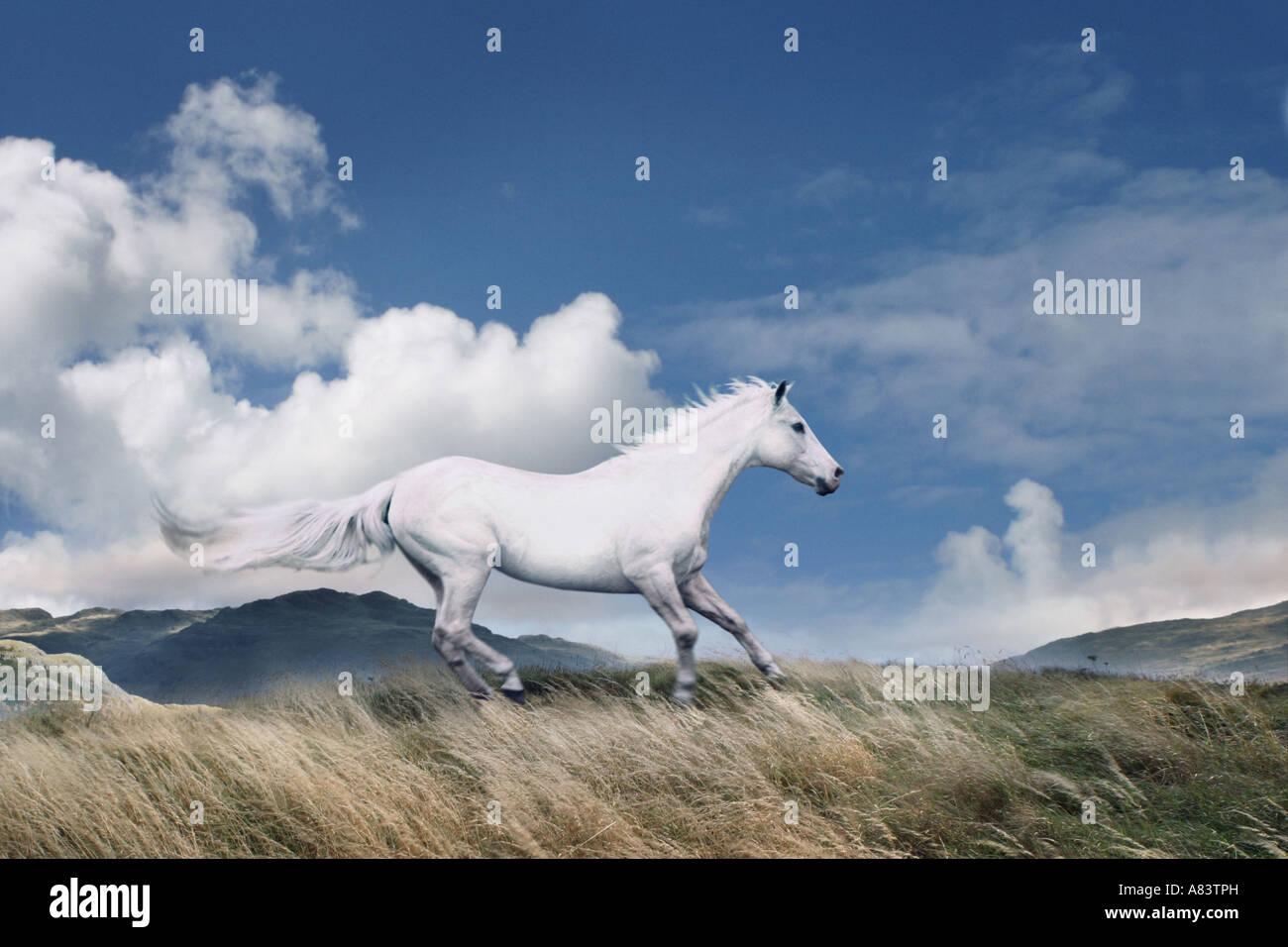 Caballo blanco corriendo libre en Hillside Imagen De Stock