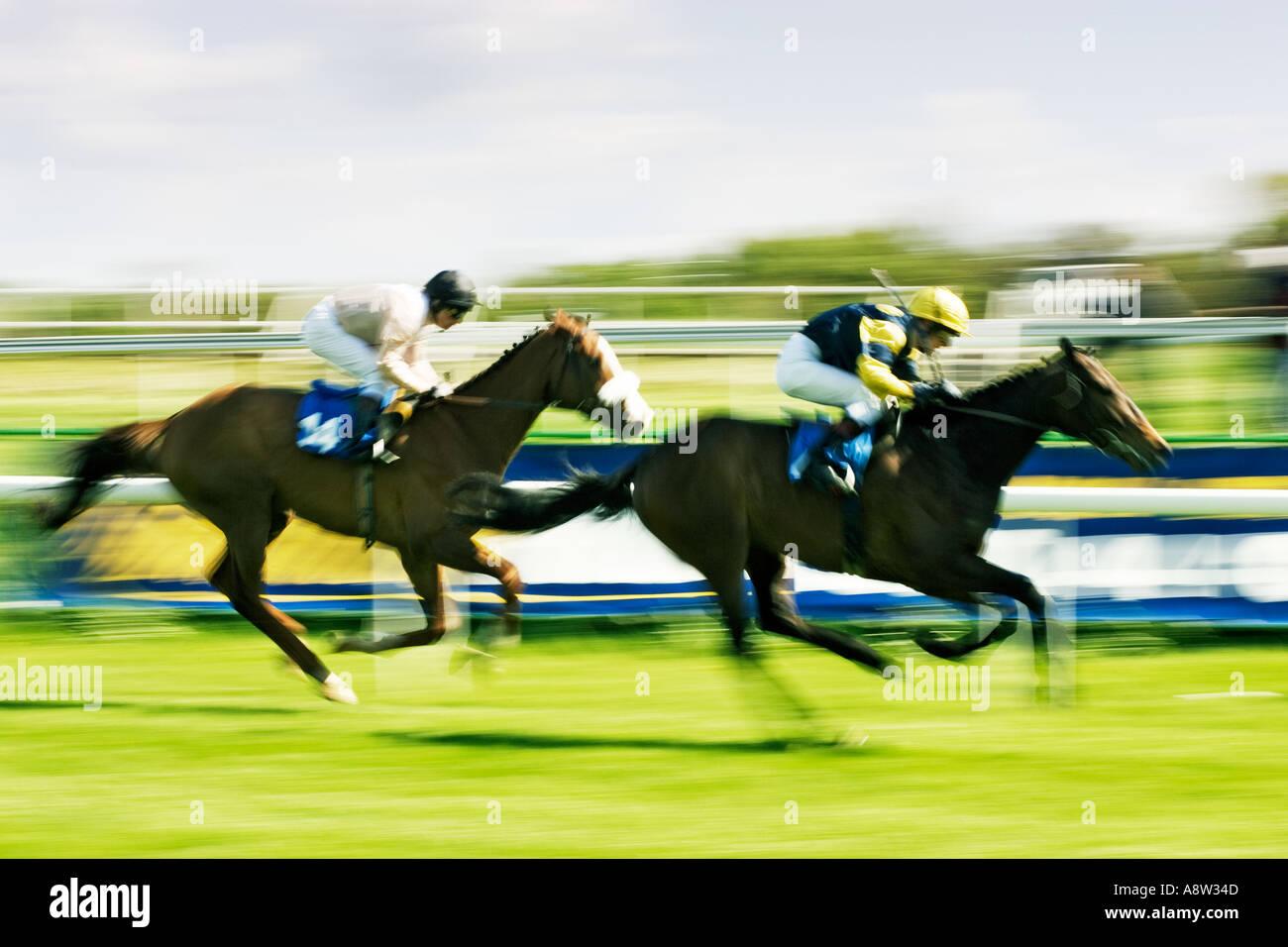Carreras de Caballos - En la carrera a la línea de meta. Imagen De Stock