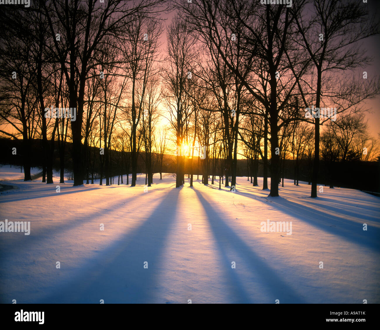 Puesta de sol a través de los árboles desnudo paisaje cubierto de nieve en invierno, Pennsylvania, EE.UU. Imagen De Stock