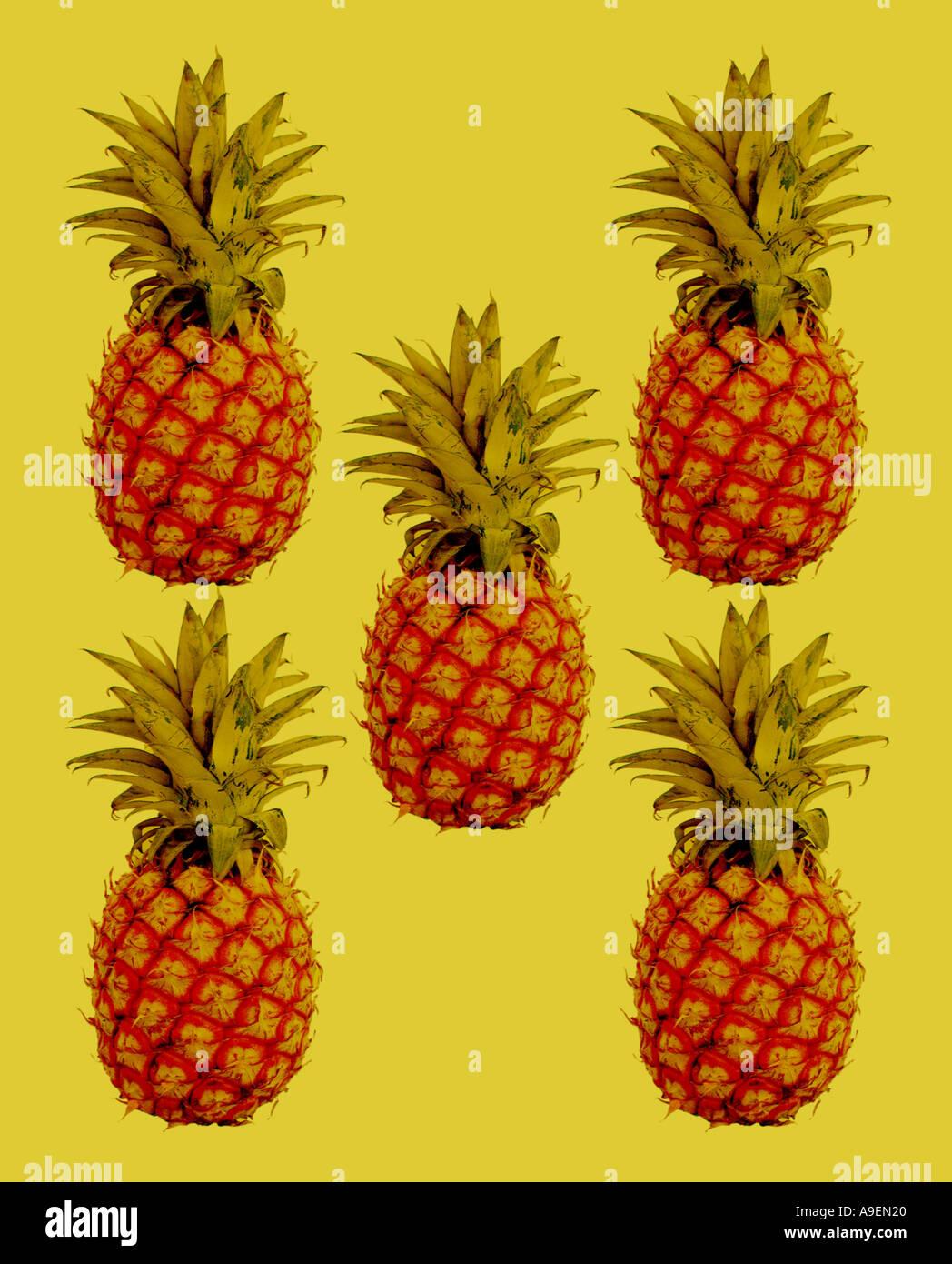 Nombre común El nombre latino de piña (Ananas comosus Imagen De Stock