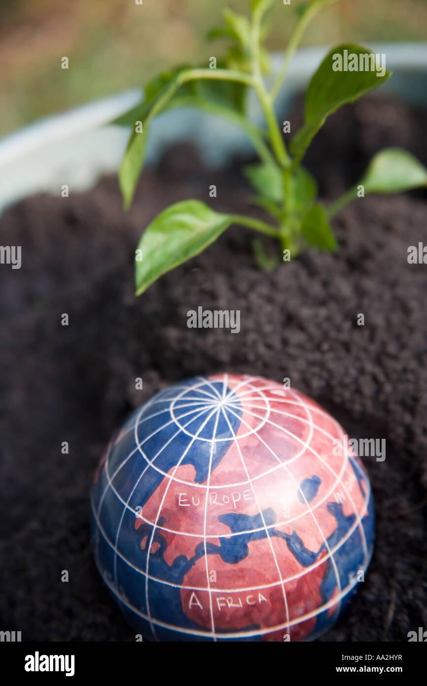 Un globo del mundo con Europa y África que muestra se coloca en un pote de tierra con un arbolillo en el fondo. Imagen De Stock