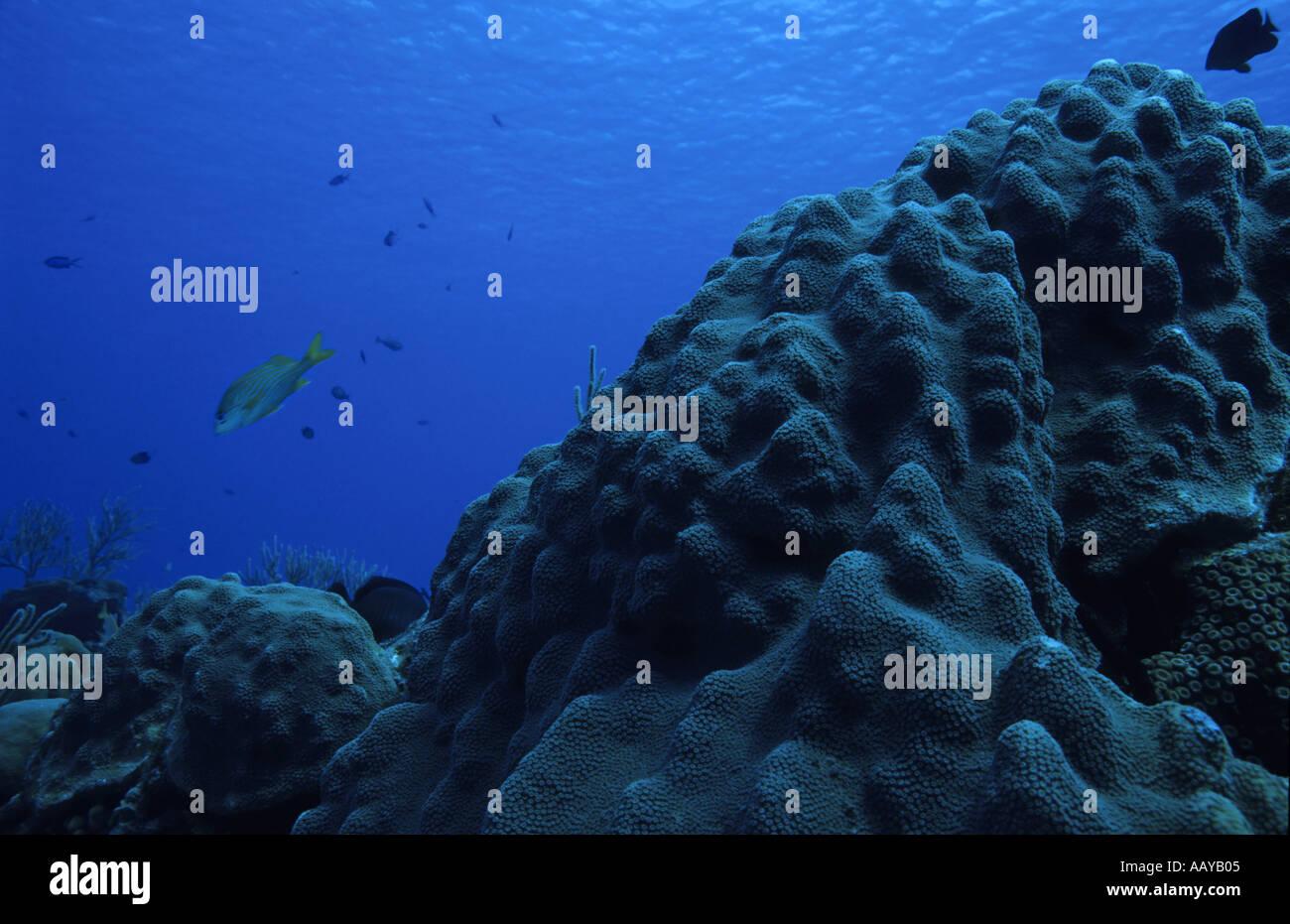 La Isla de Cozumel México paraíso de coral y peces Imagen De Stock