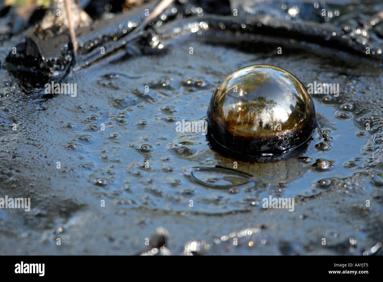 Burbuja de metano en el asfalto seep, La Brea Tar Pits, Página museum, Los Angeles, California Imagen De Stock
