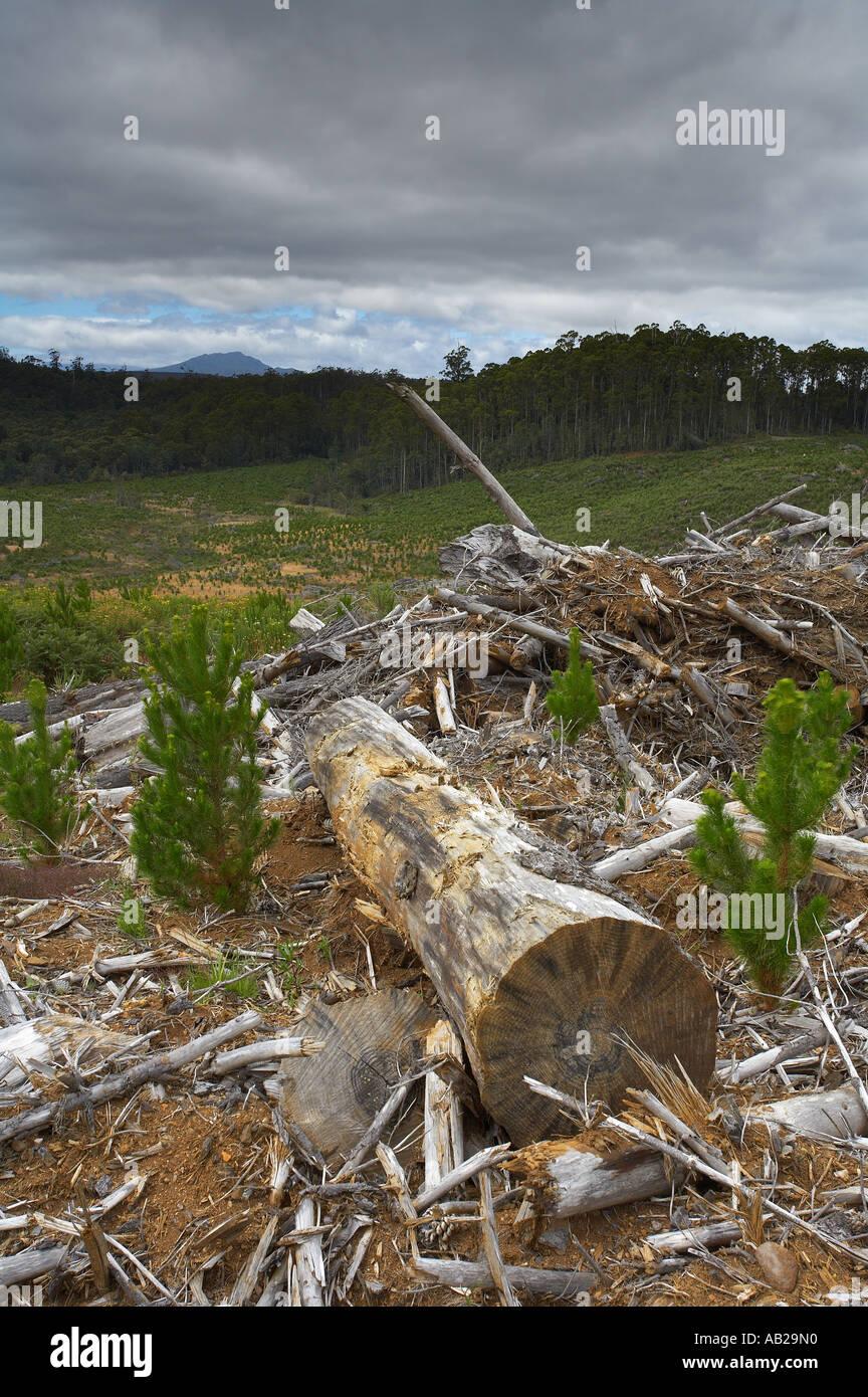 Deforestación registro nr Yolla Cam Valley North West Tasmania Australia Imagen De Stock