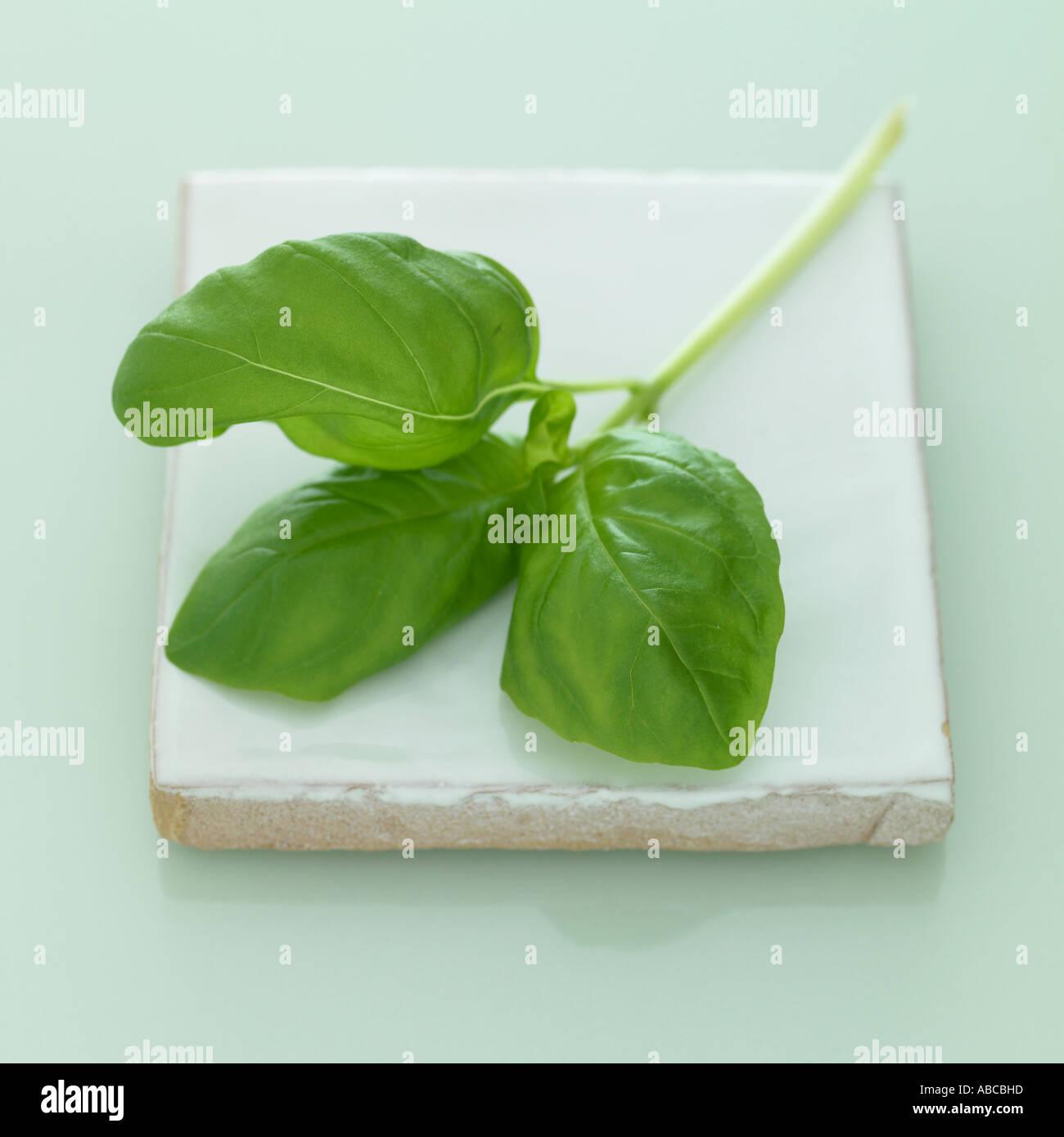Albahaca - un conjunto de imágenes de hierbas similares Imagen De Stock