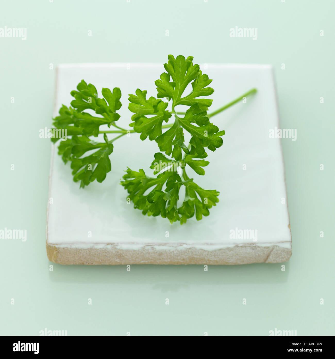 Perejil - uno de una serie de imágenes de hierbas similares Imagen De Stock