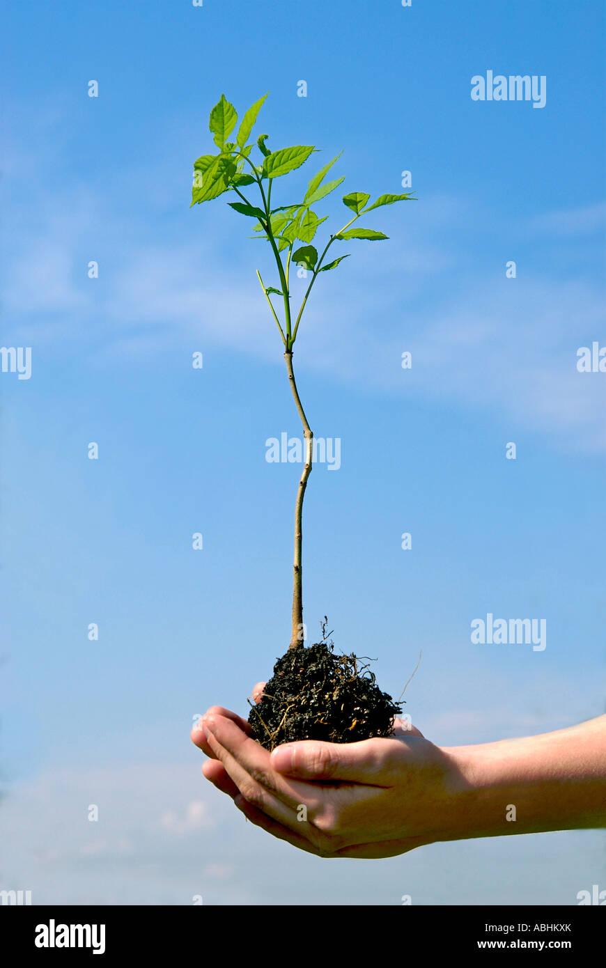 Manos sosteniendo una planta joven afuera - concepto de crecimiento Imagen De Stock