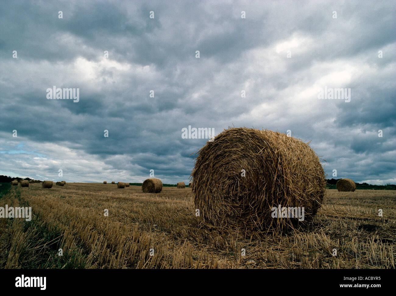 Los fardos de paja y cortar campo de trigo Foto de stock