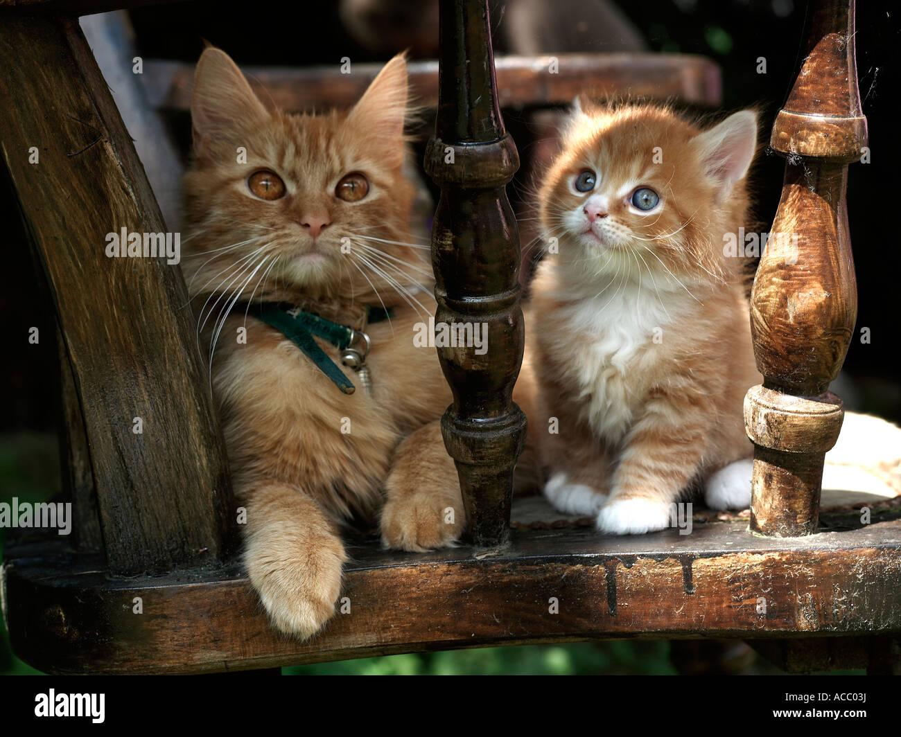 Un pequeño gatito y su madre sentada en una silla. Imagen De Stock