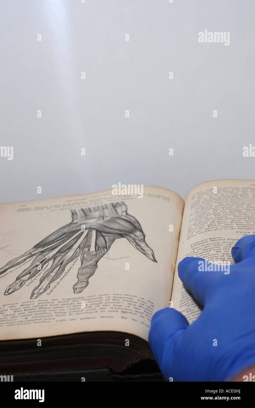 El investigador hace referencia a un dibujo de la palma de la mano ...