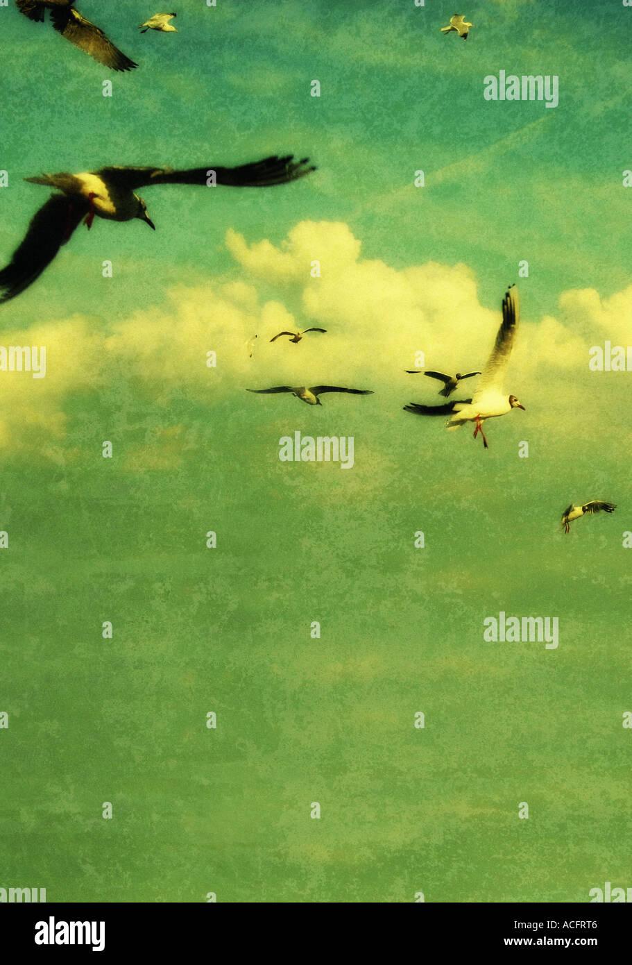 Foto de gaviotas en vuelo Imagen De Stock