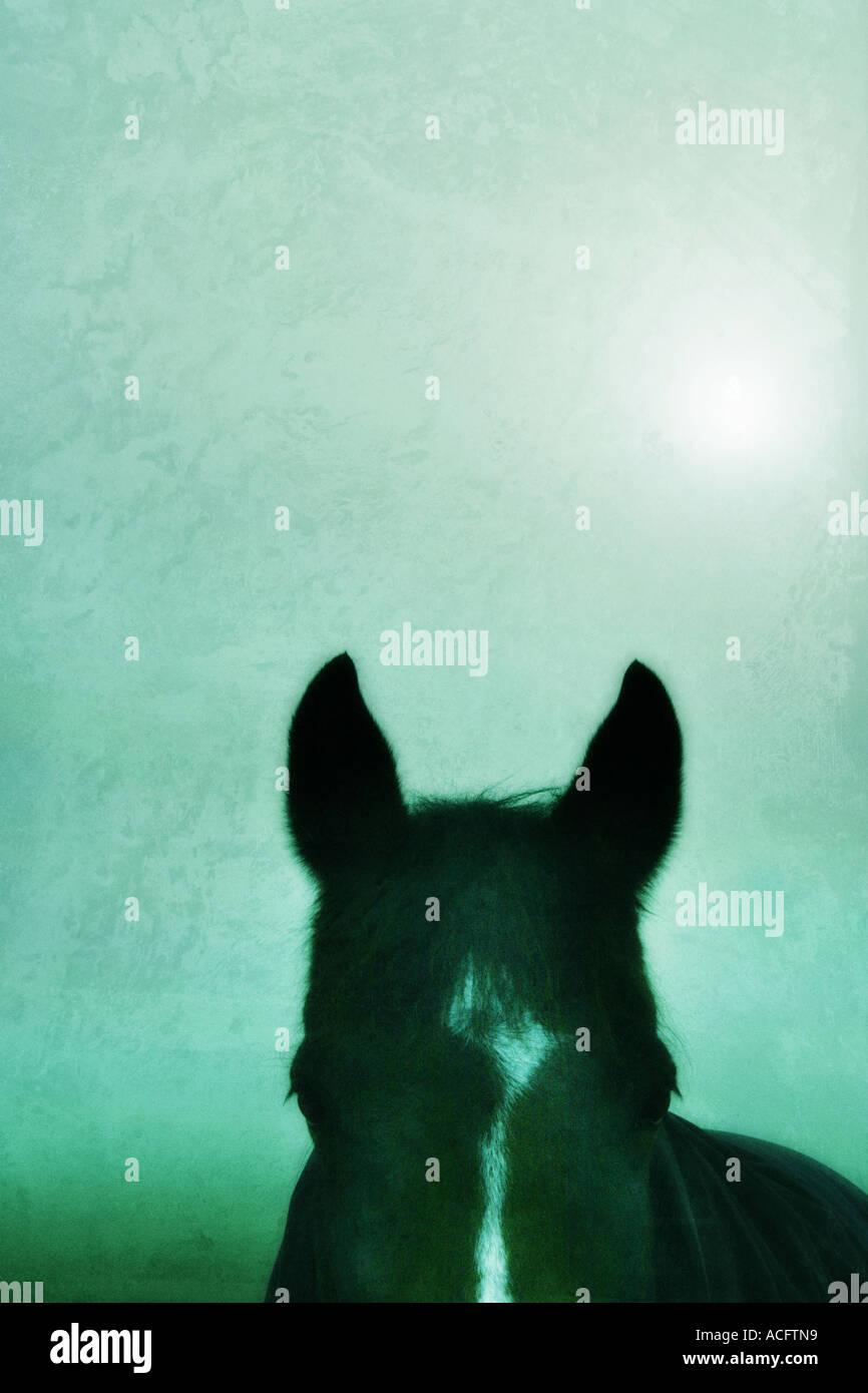 Foto de un caballo orejas Imagen De Stock