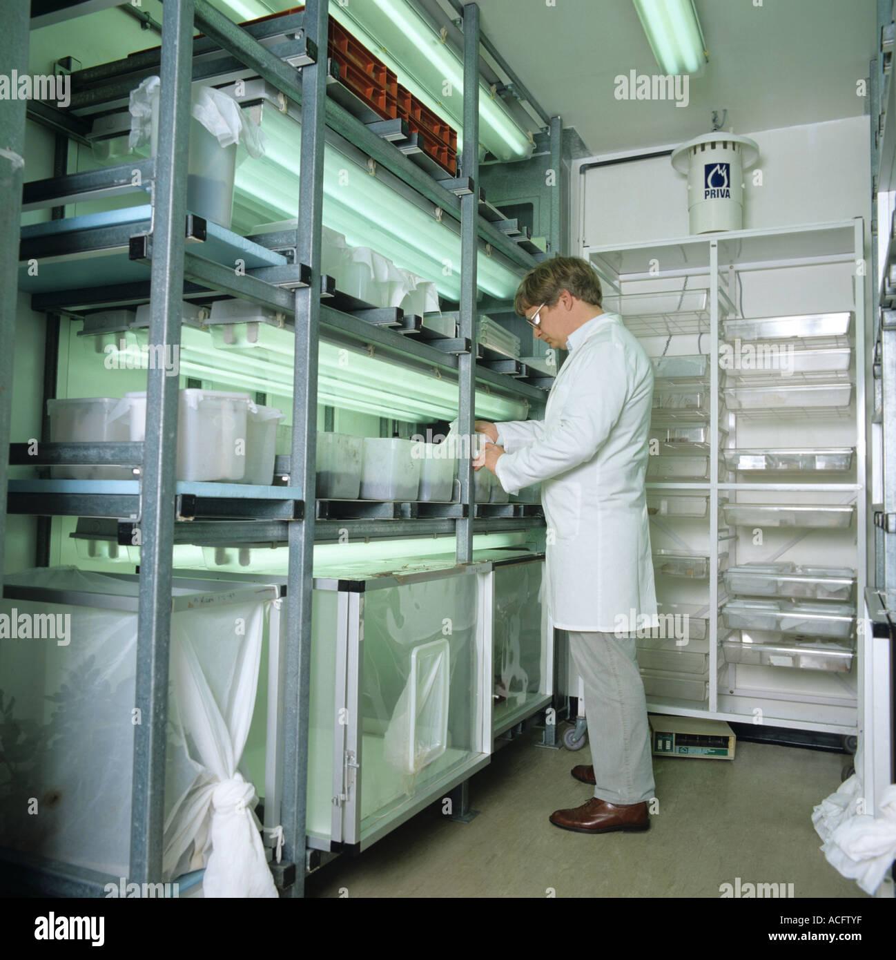 Habitaciones de ambiente controlado para la cría de insectos para la investigación de plaguicidas Foto de stock