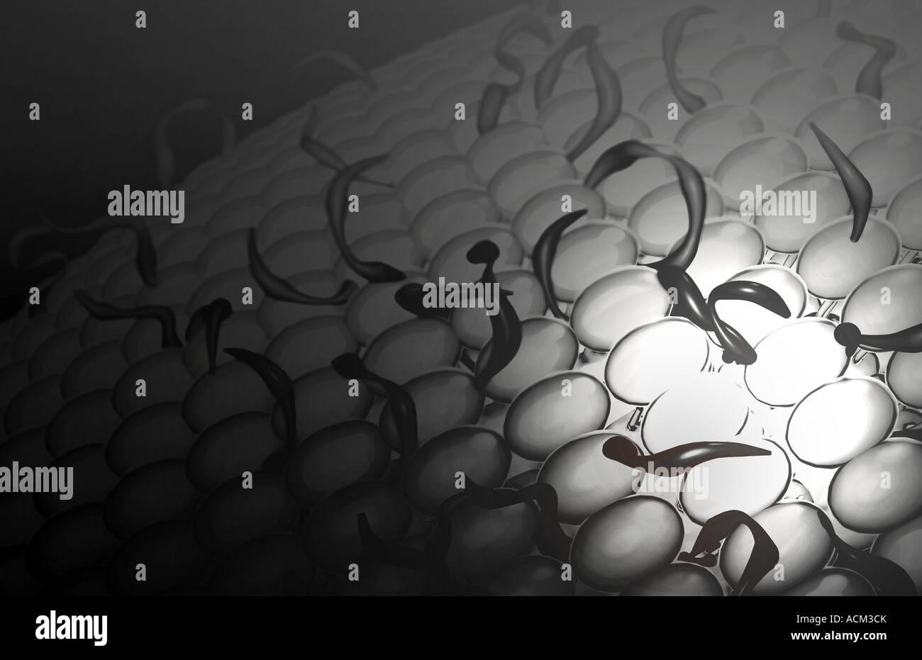 Membrana de la célula Foto & Imagen De Stock: 13184898 - Alamy