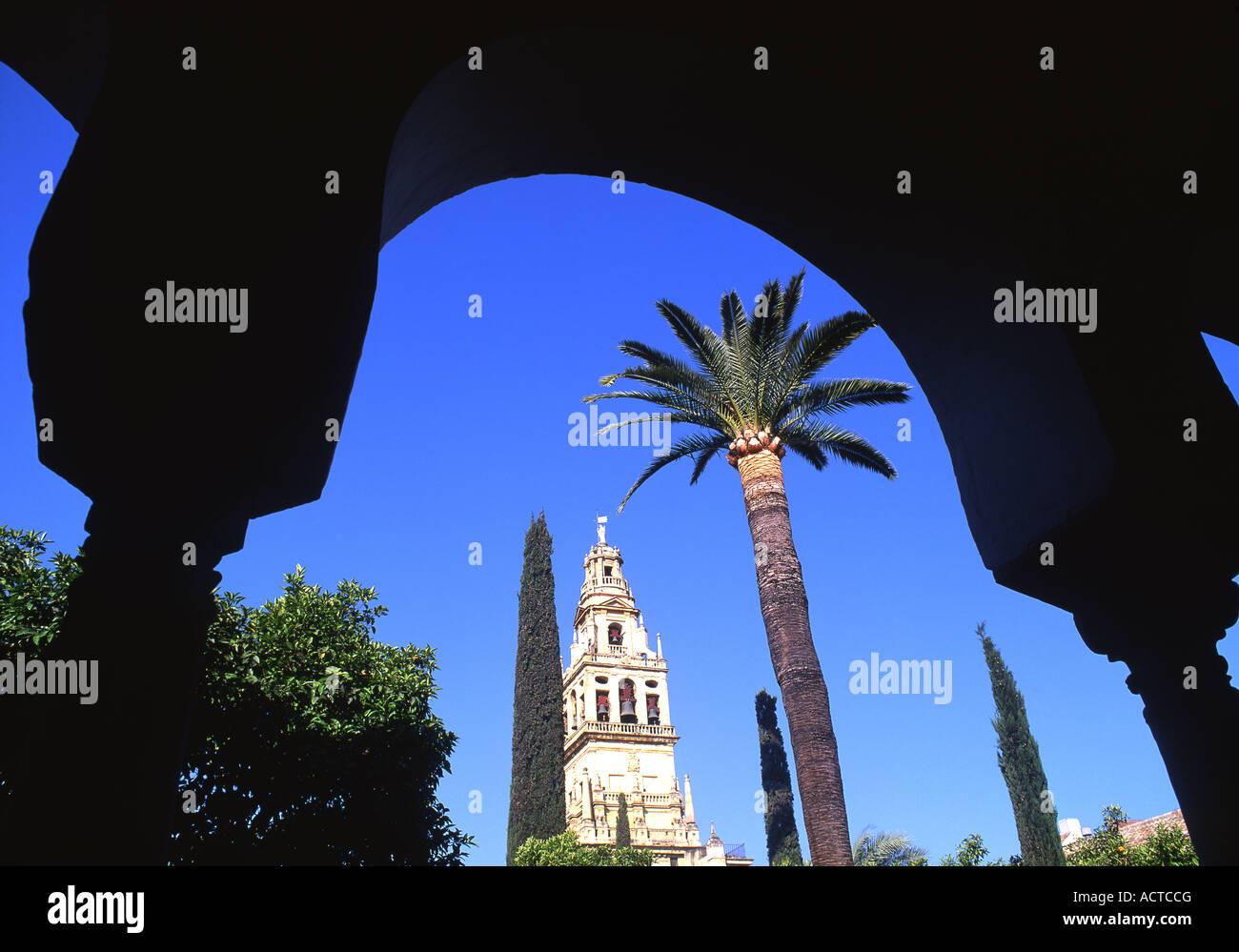 Torre campanario de la Catedral Mezquita la Gran Mezquita y palmera ...