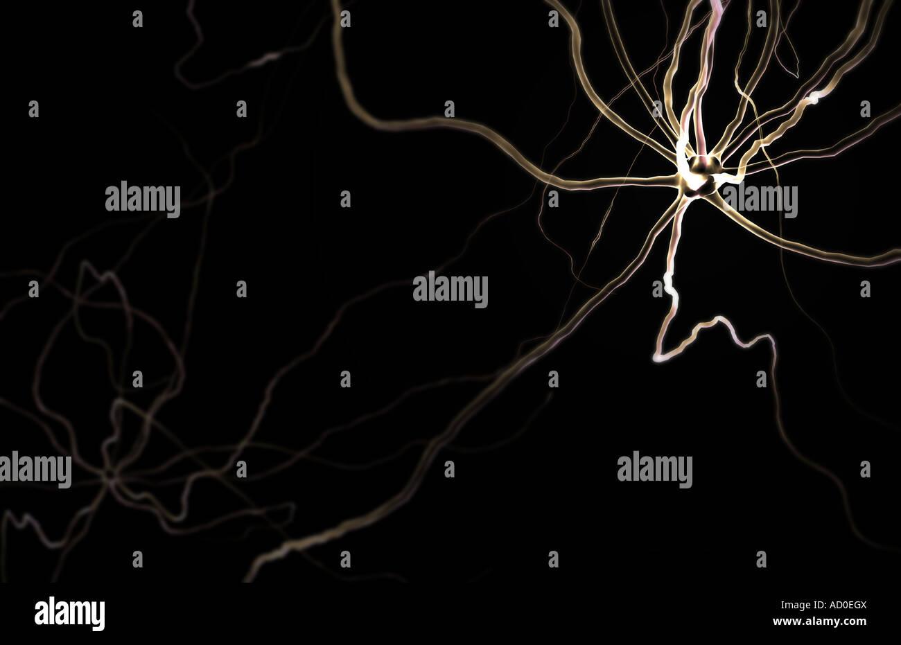 Neuronas Imagen De Stock