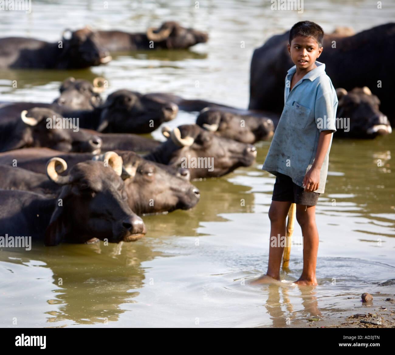 Un chico joven buscando su búfalo de agua en la cuenca del Ganges en Varanasi. Imagen De Stock