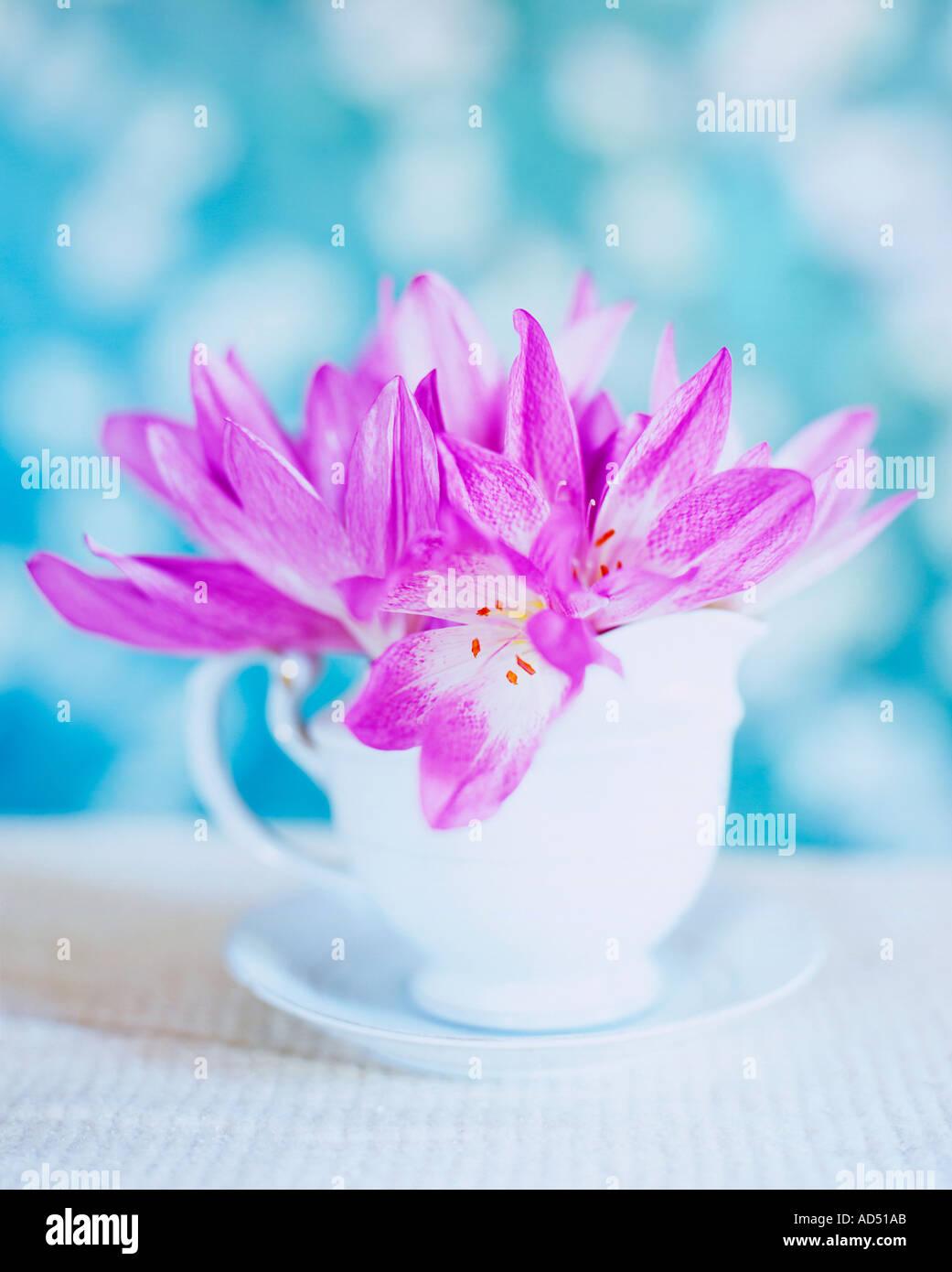 Flores bodegón Imagen De Stock