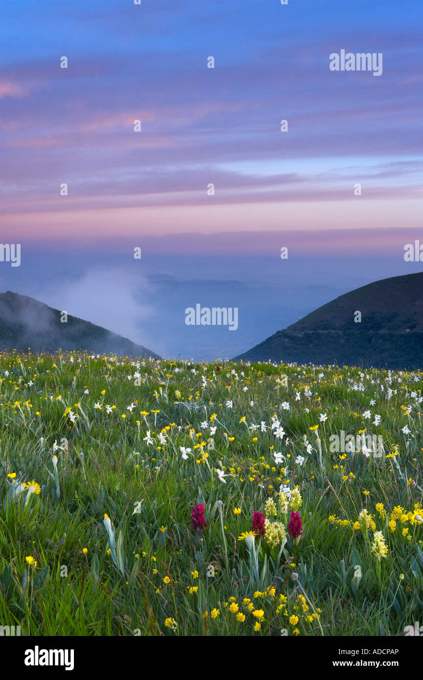 Flores silvestres creciendo a la Forca Canapine Monti Sibillini National Park Umbria Italia NR Foto de stock