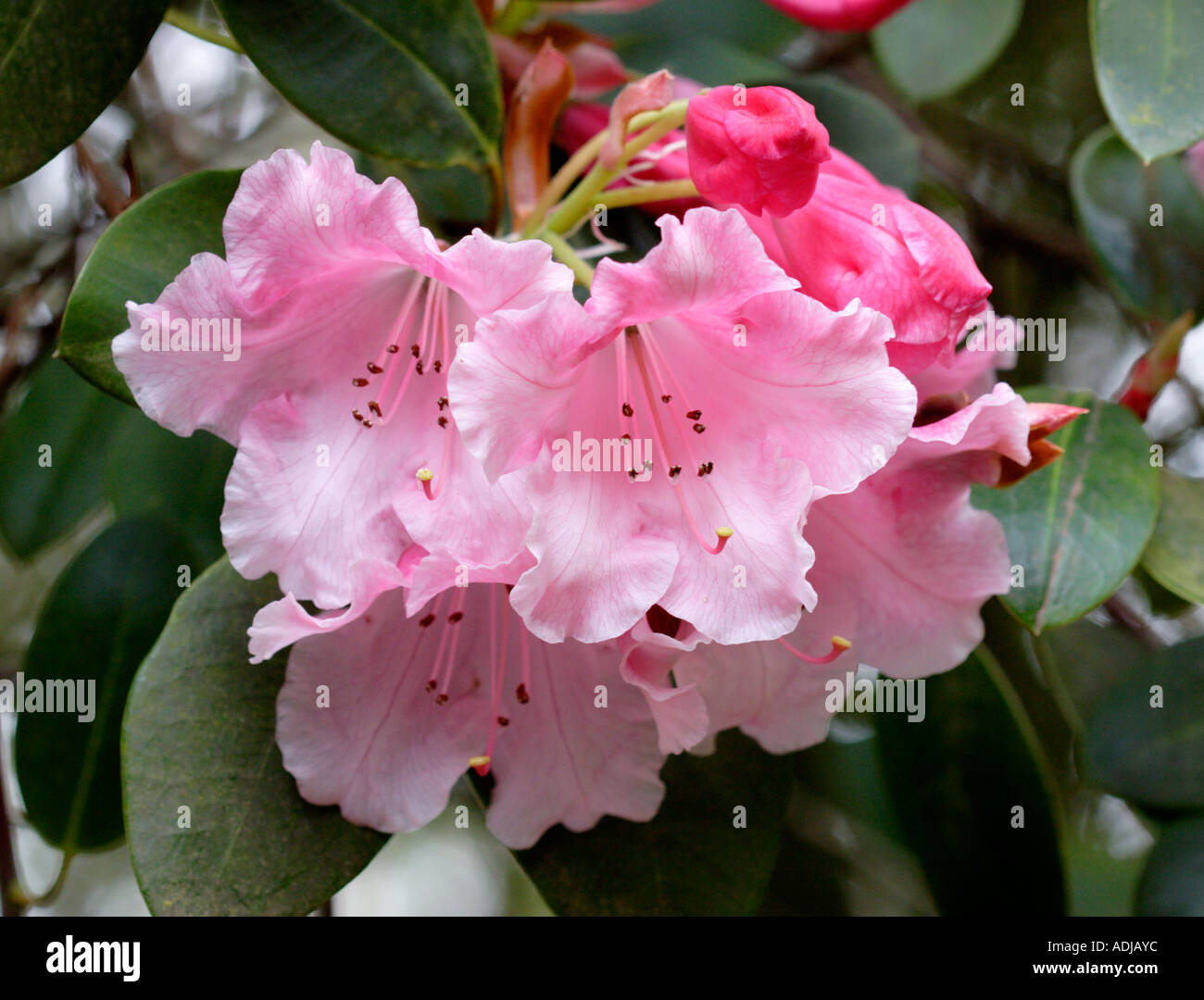 Brocade Imágenes De Stock & Brocade Fotos De Stock - Alamy