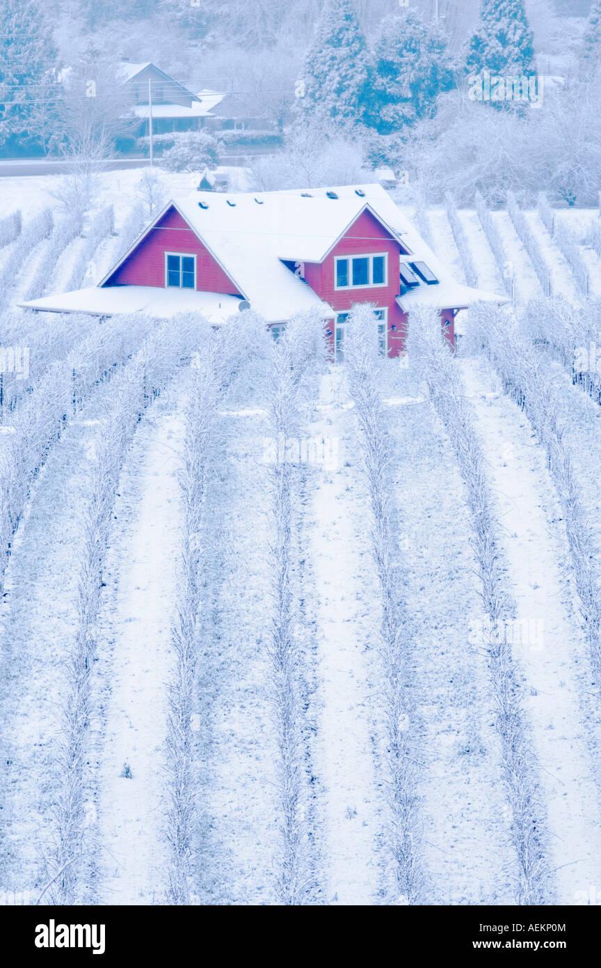 Sokol Blosser viñedos con nieve y farm house Oregon Imagen De Stock