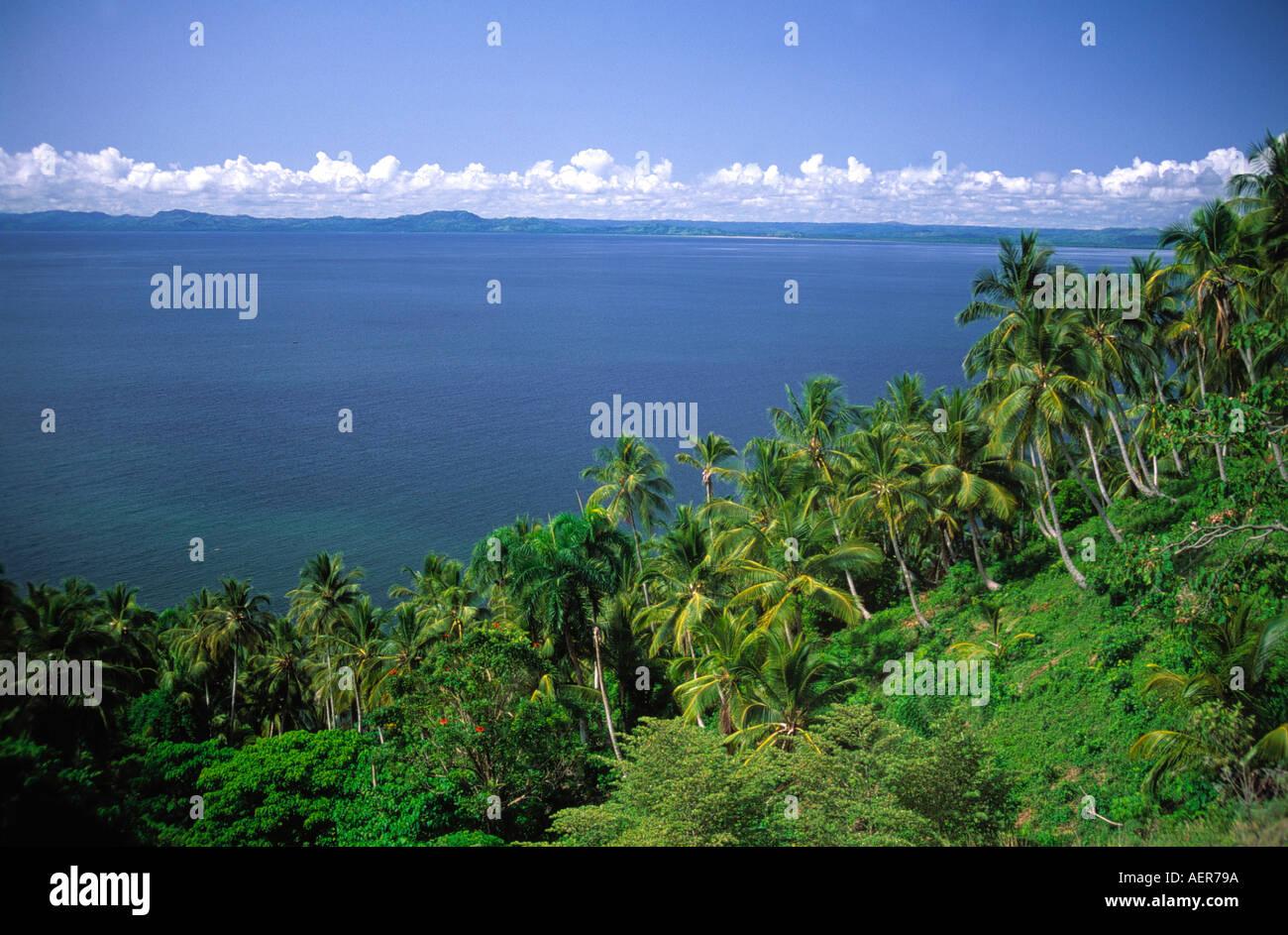 Coconut grove de palmeras cerca de la aldea de Samana Republica Dominicana archipiélago de las Antillas Mayores del Caribe Foto de stock