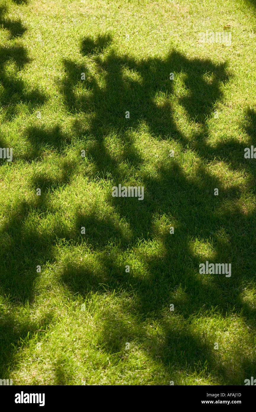 Tonos Sombra Sombra Y Luz Sobre Un Cesped Con Hojas De Los Arboles - Arboles-que-dan-sombra