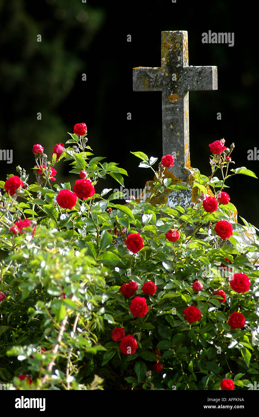 4204 bcvr 50 Cementerio de crédito Florenz Peter Duddek buchcover com Imagen De Stock