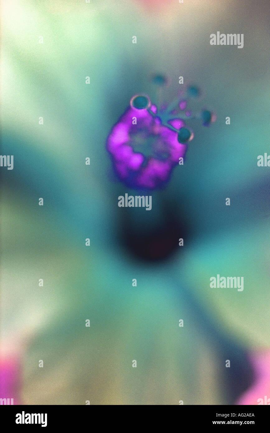 Cierre de flor alterada digitalmente Imagen De Stock