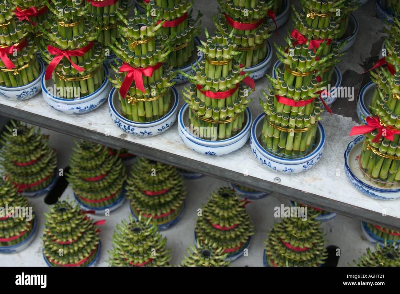 Agua Decorativos Plantas De Bambú Para Feng Shui Decoración