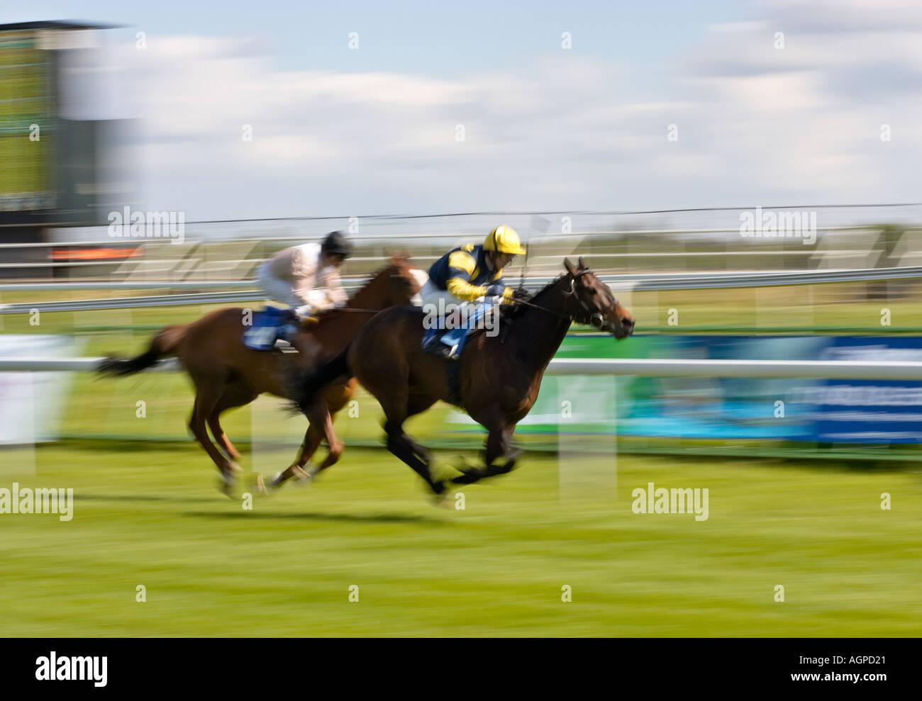 Las carreras de caballos en una carrera por la línea de meta Imagen De Stock