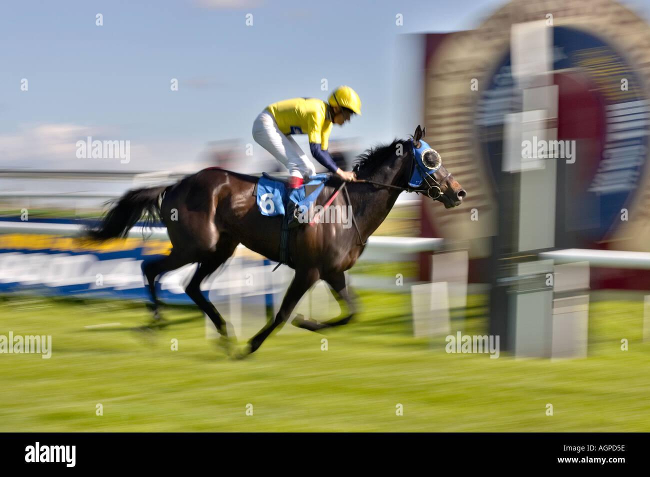 Ganar una carrera - carreras de caballos en el acabado / post ganadora Imagen De Stock