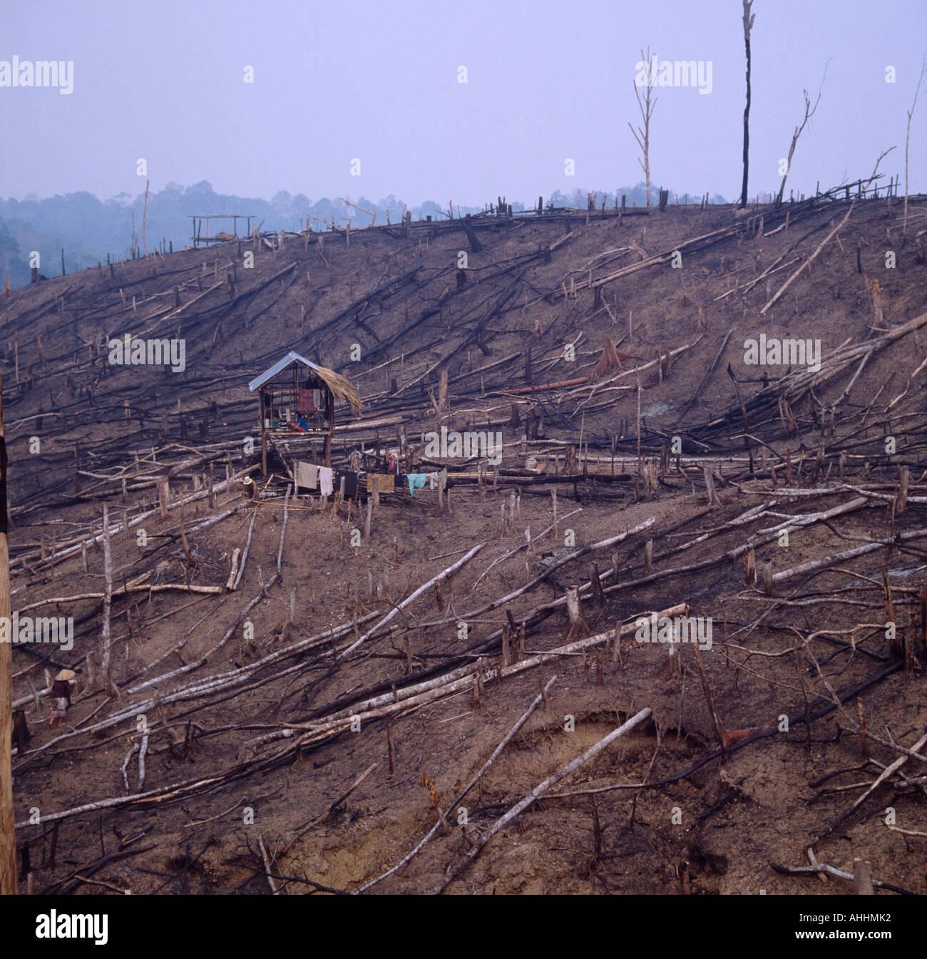 Sudeste Asiático indonesia de Sumatra la deforestación. Familia en la choza en el centro del bosque borrados recientemente. Imagen De Stock