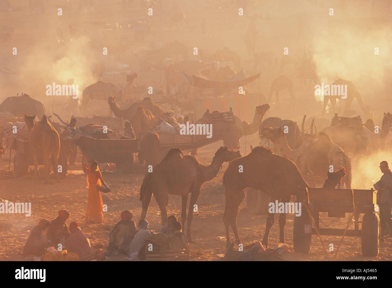 Feria de camellos de Pushkar Rajasthan India Imagen De Stock